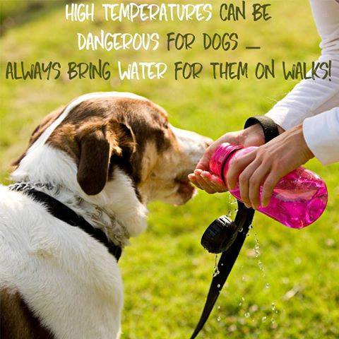 Always Keep Your Dogs Hydrated