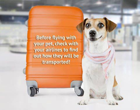 Check Your Airline Pet Policies