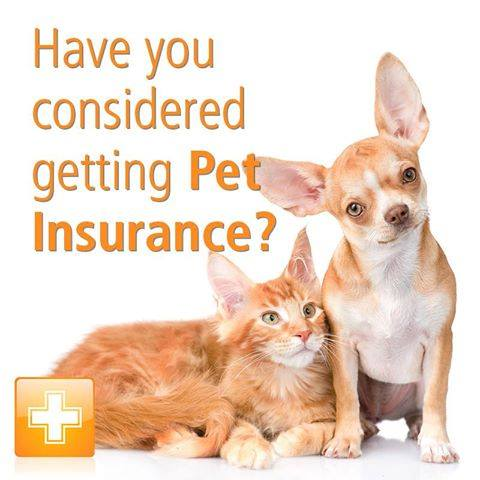 Have you considered getting Pet Insurance?