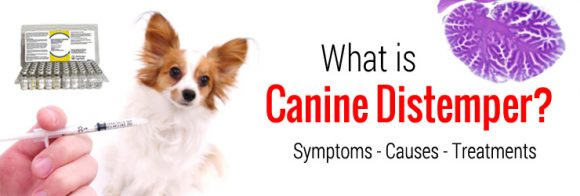Treating and Preventing Distemper in Dogs