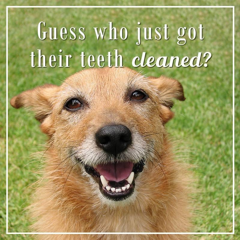 teethclean