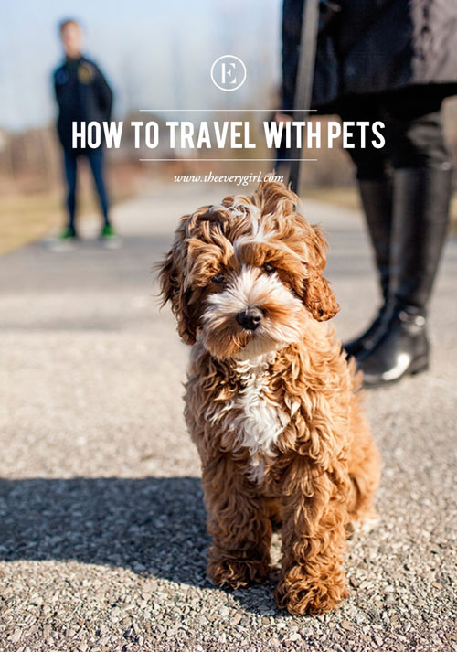 How to Travel with Pets